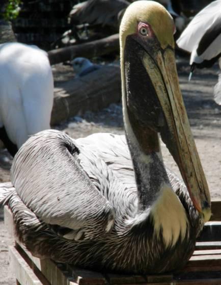 flamingo-gardens-10