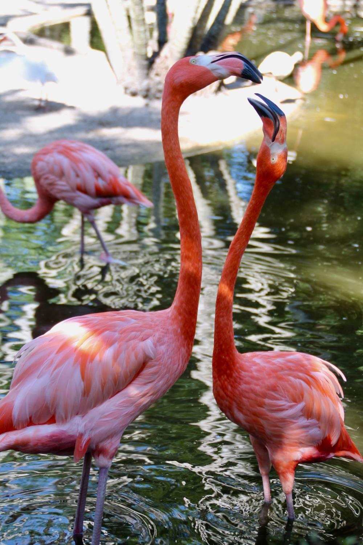 flamingo-gardens-36