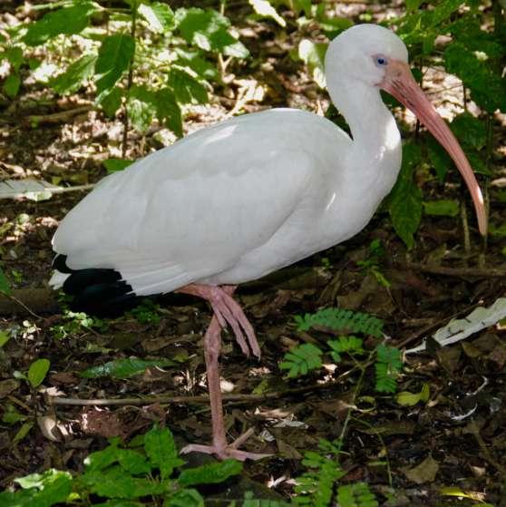 flamingo-gardens-9